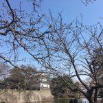 image1_4.jpeg